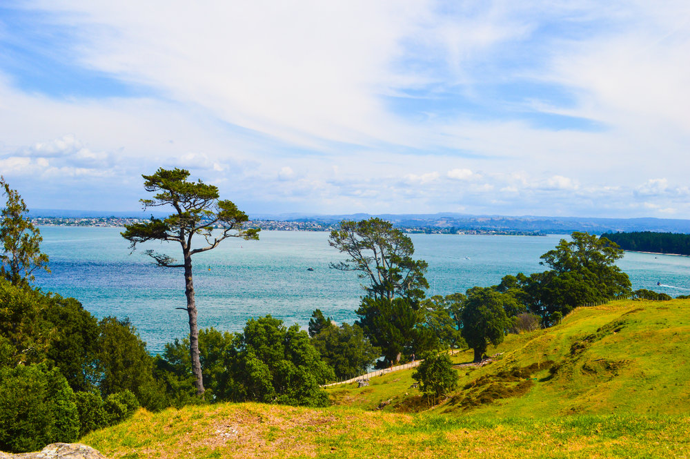 view from volcano in Tauranga