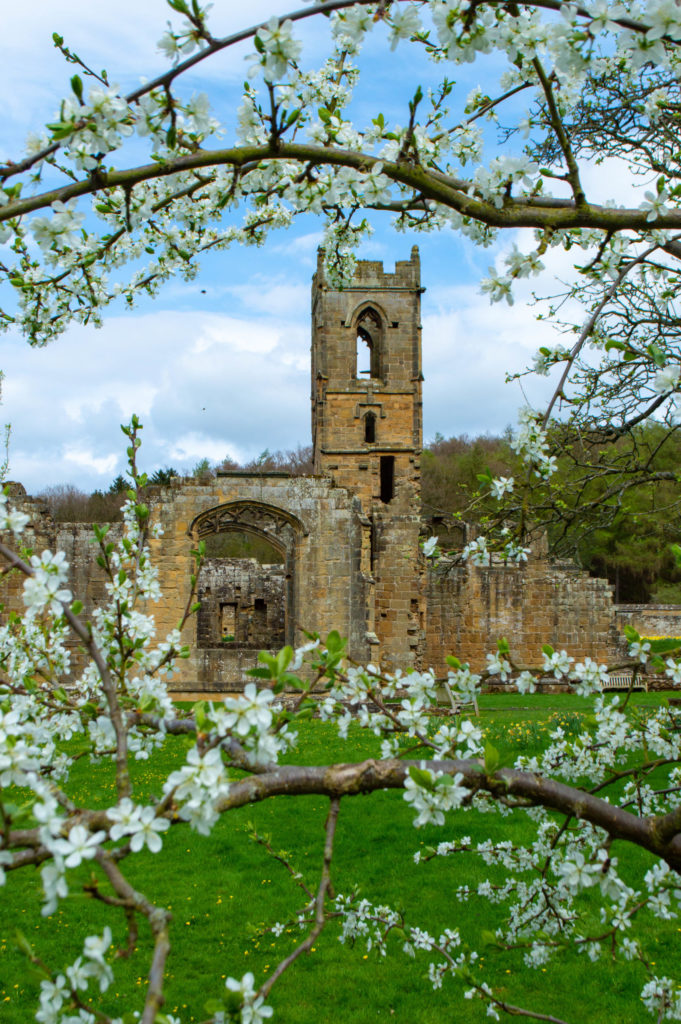 mount grace priory through blossom tree
