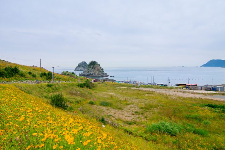 field of yellow flowers and sea at Busan, South Korea
