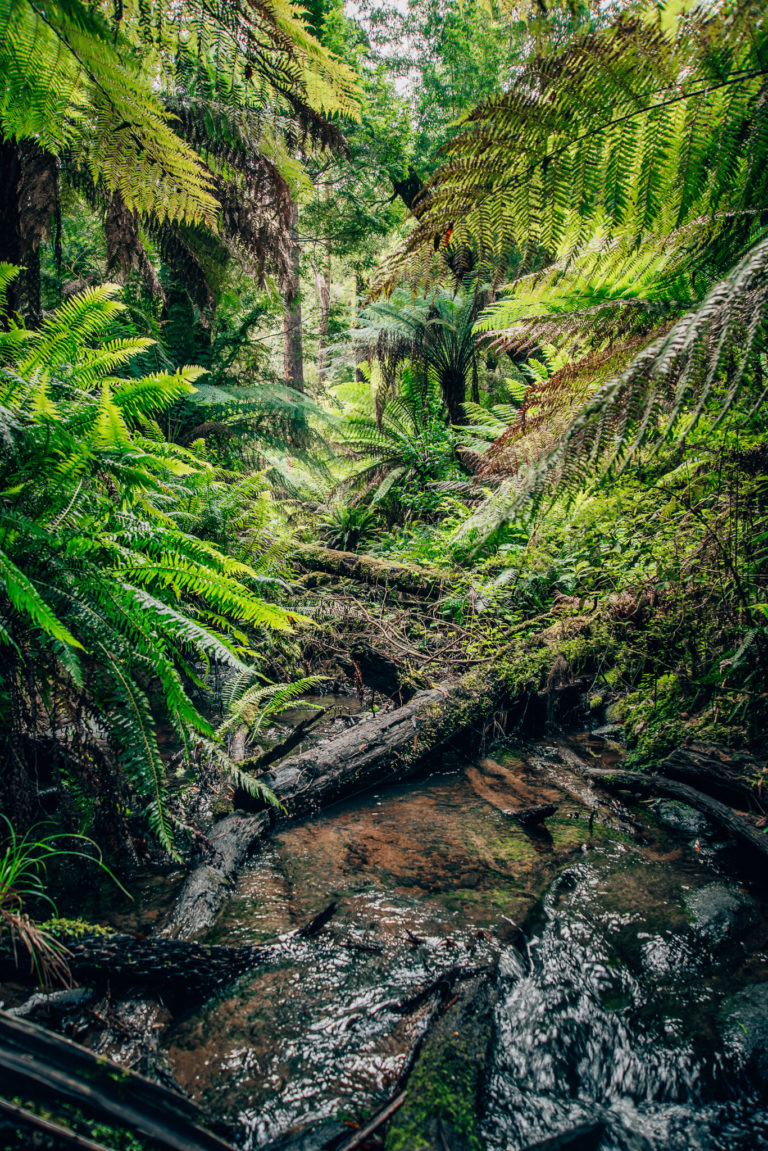 creek running through rainforest in the otways national park