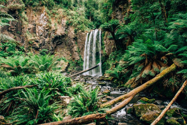 hopetoun falls framed with fern treets and rocks