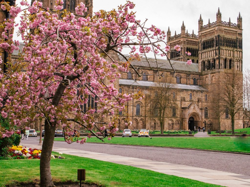 Durham Cathedral with pink blossom in foreground