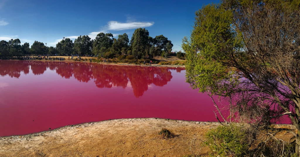 bright pink lake surrounded my trees