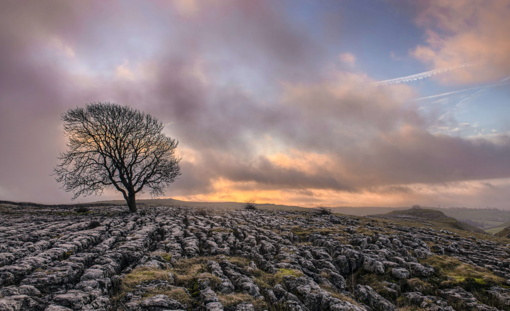 limestone pavement with single tree silhouette at dusk