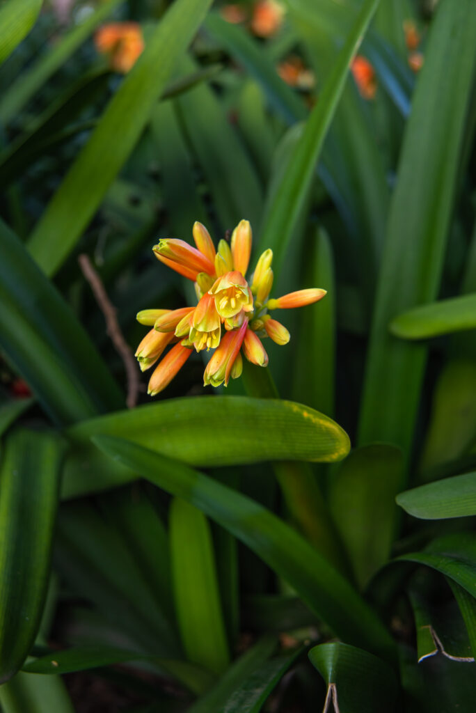 orange and yellow flowers with long green leaves